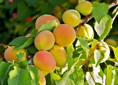Weiß - Fruchtig