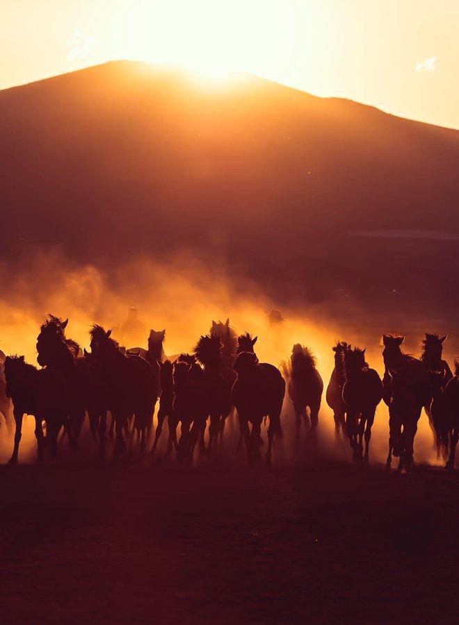 The desert horses