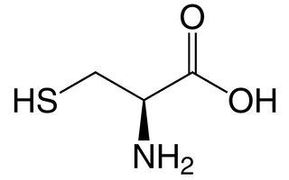 Cysteïne