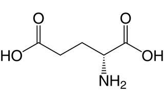 Ácido glutamico