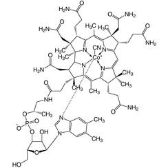 Vitamin B12 ≥96 %
