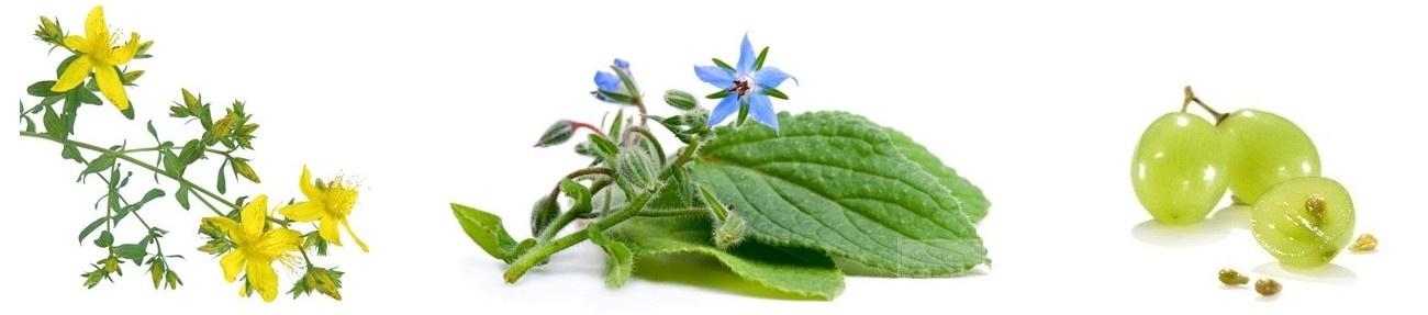 natuurlijke vitamines vitaminbottle