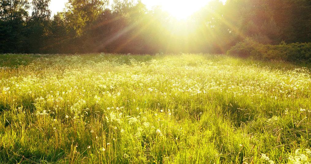 Waarom worden natuurlijke supplementen beter opgenomen door het lichaam dan synthetische?