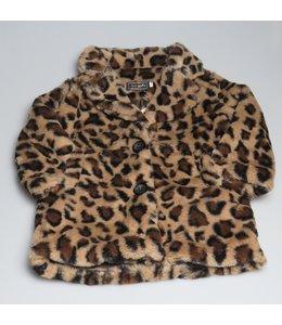 leopard > Teddy