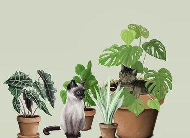 Drawingplantlady