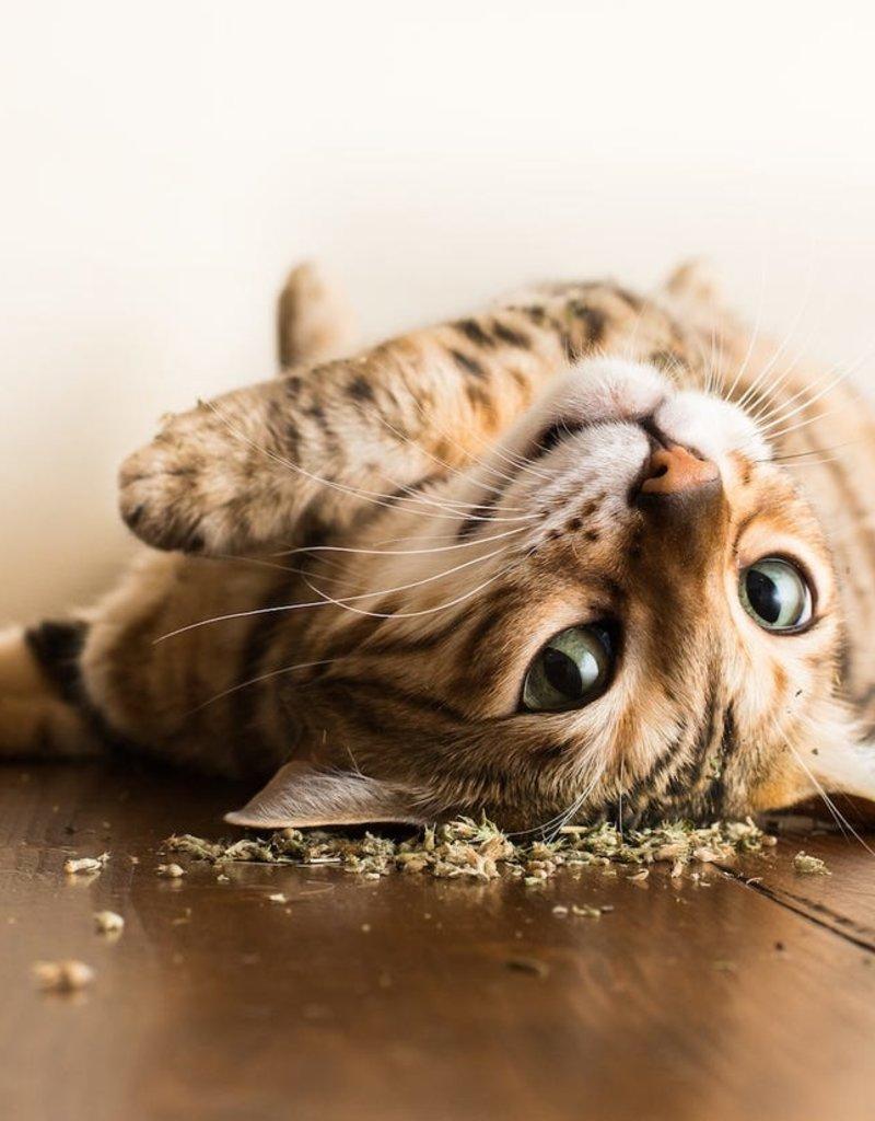 Andrew Marttila Andrew Marttila - Cats on Catnip