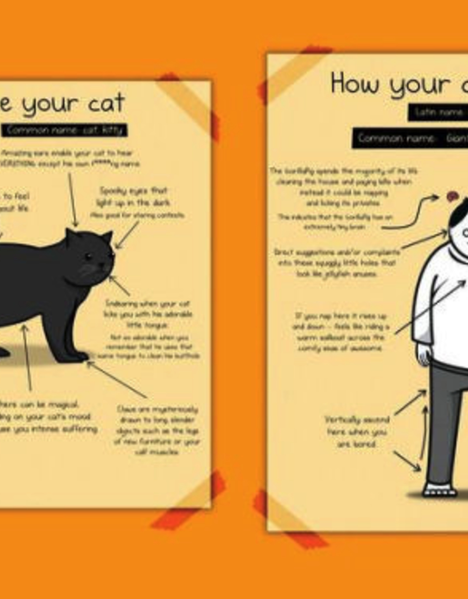 The oatmeal The Oatmeal - How to tell if your cat is plotting to kill you