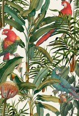 Behang Parrots of Brasil - 156 x 300 cm