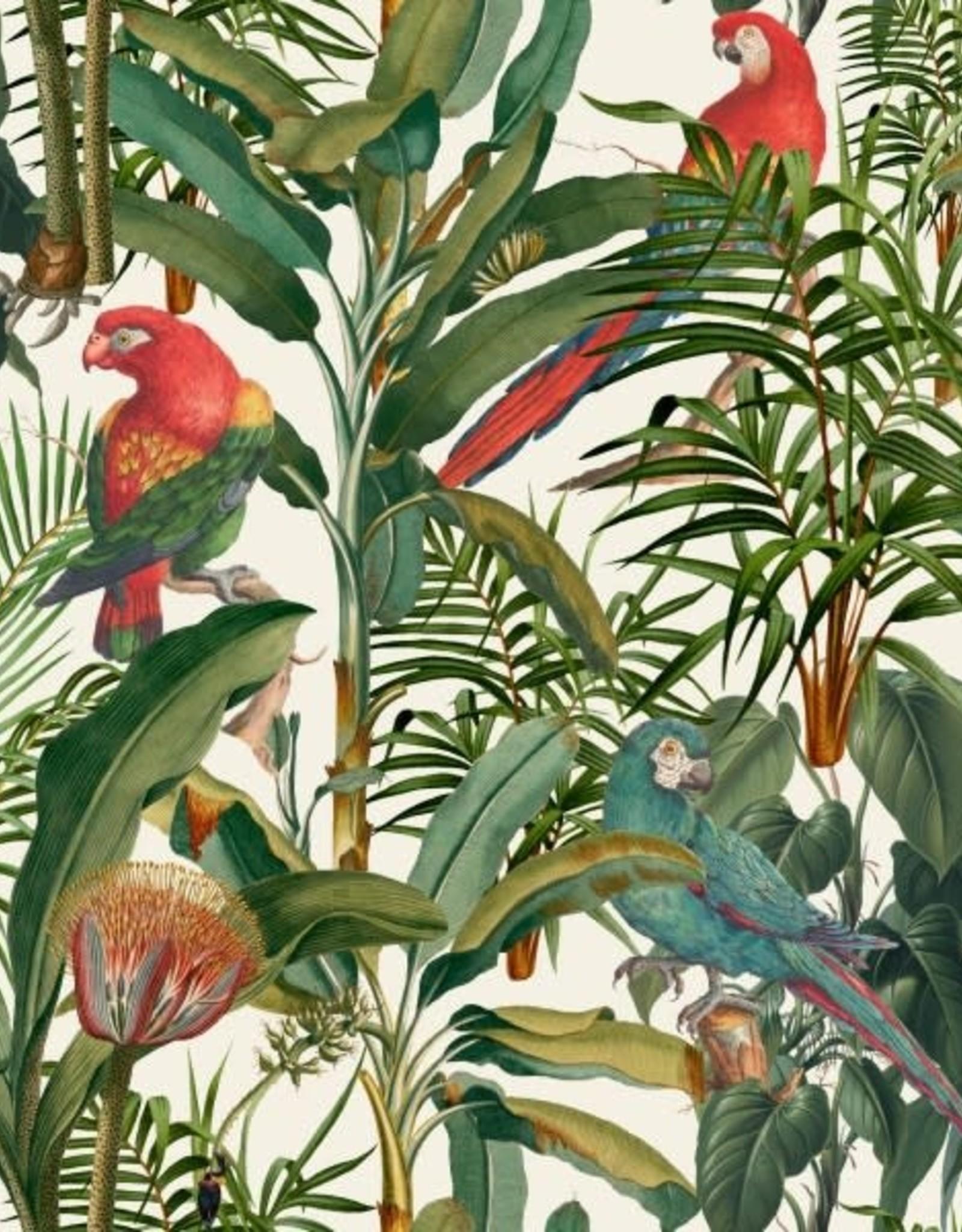 Mind the Gap Behang Parrots of Brasil - 156 x 300 cm