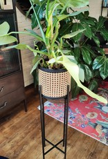 Plantenstaander webbing - small