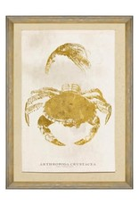 Mind the Gap Framed Art 50 x 70 cm - Caribbean Sea Life - Arthropoda Crustacea