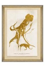 Mind the Gap Framed Art 50 x 70 cm - Caribbean Sea Life - Cephalapoda