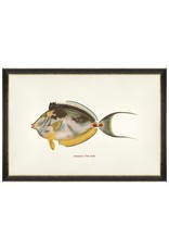 Mind the Gap Framed Art 60 x 40 cm - Fishes of hawaii - Kala Fish