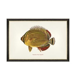 Mind the Gap Framed Art 60 x 40 cm - Fishes of hawaii - Kapuhili Fish Fish
