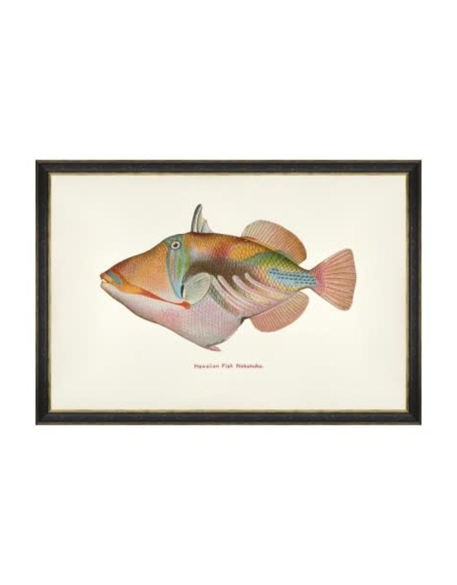 Mind the Gap Framed Art 60 x 40 cm - Fishes of hawaii - Nakunuku Fish