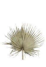 Madam Stoltz Palmblad 80 cm