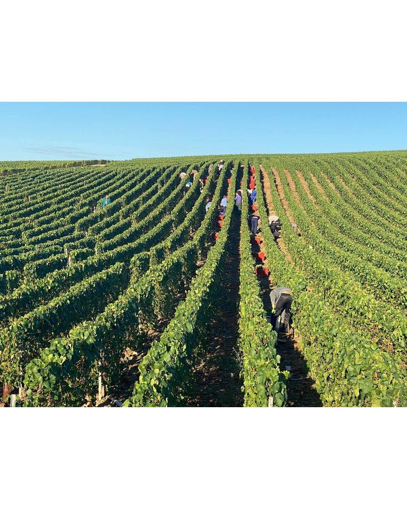 Bottle of the week #16 Champagne Frederic Orcin Les Grains de Vormets chardonnay 5+1