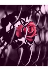 Andrea Maack Andrea Maack - DARK - Eau de Parfum
