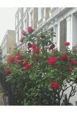Gallivant Gallivant - London - Eau de Parfum