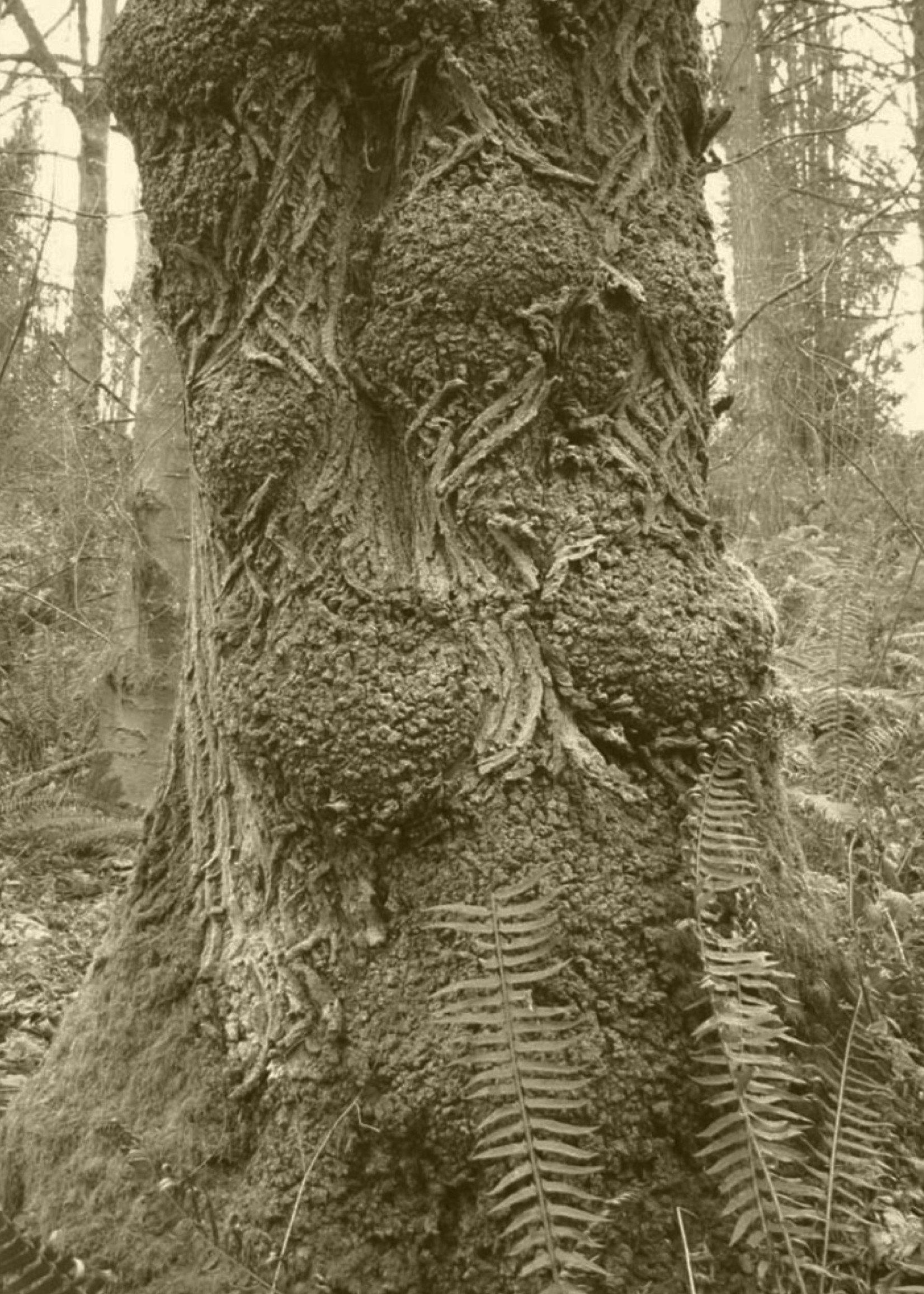 WienerBlut WienerBlut - Freudian Wood - Eau de parfum