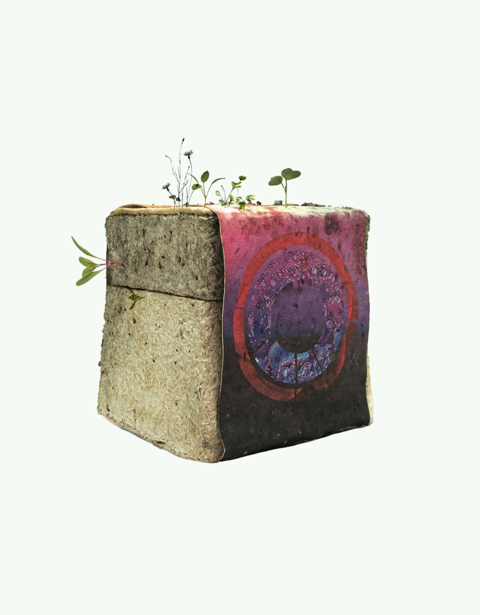 """Haeckels Haeckels - Botany Bay GPS 26' 3""""E - Mycelium geurkaars"""