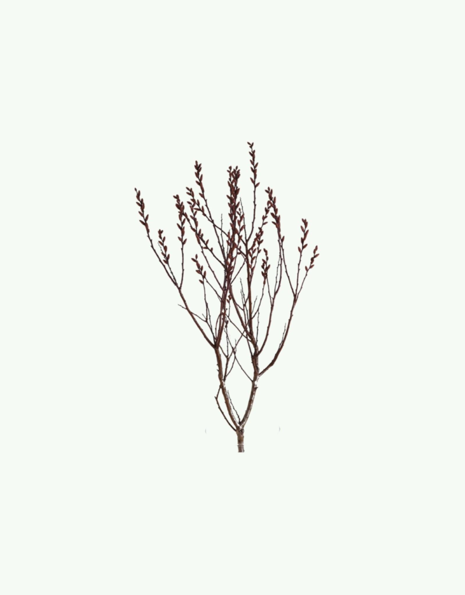 Haeckels Haeckels - Bog Myrtle - Incense Cone
