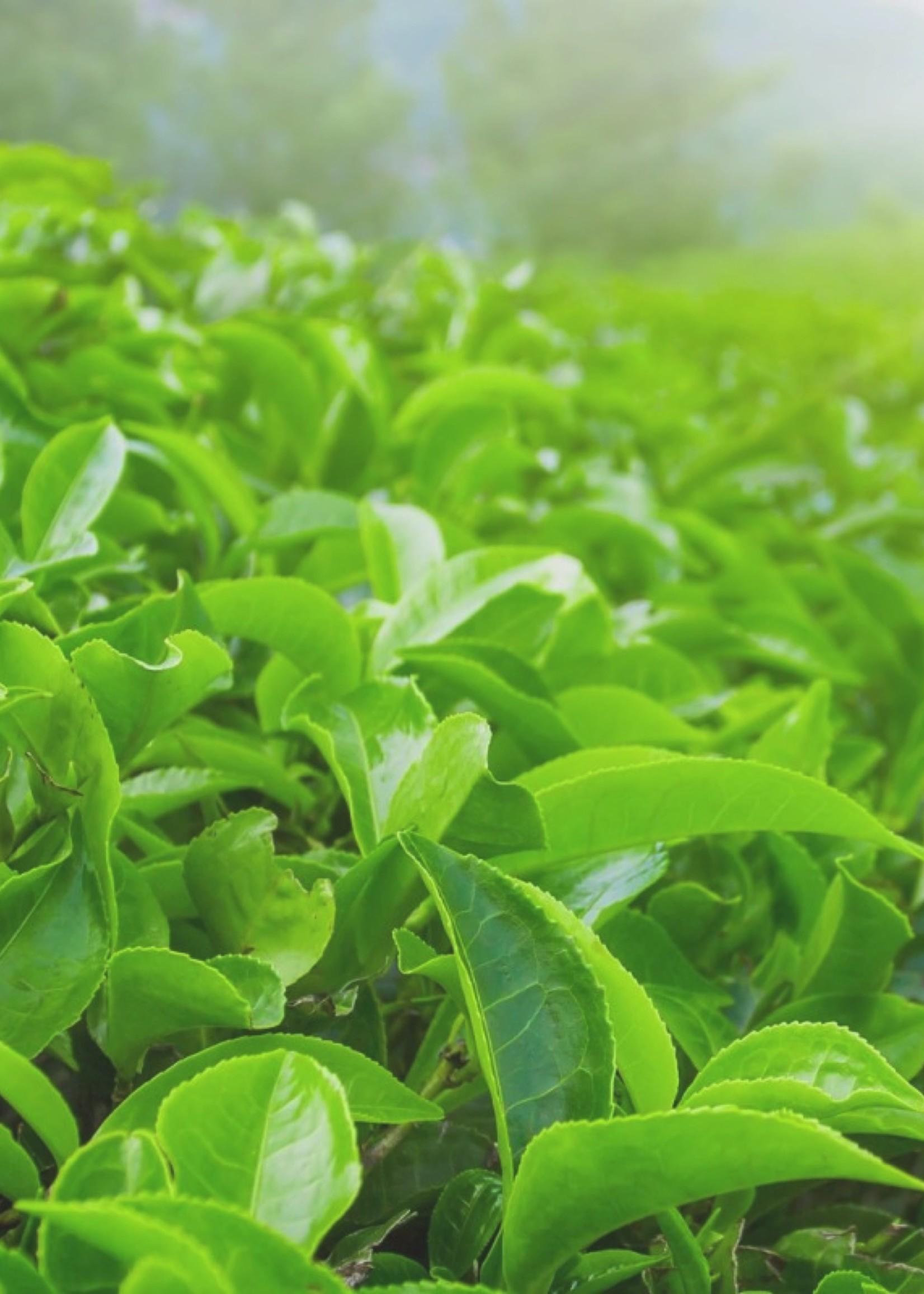Savonneries Bruxelloises Savonneries Bruxelloises - Green Tea - Glycerine Zeep - 2 x 200 gr