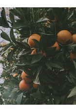 Savonneries Bruxelloises Savonneries Bruxelloises - Orange & Grapefruit - Savon