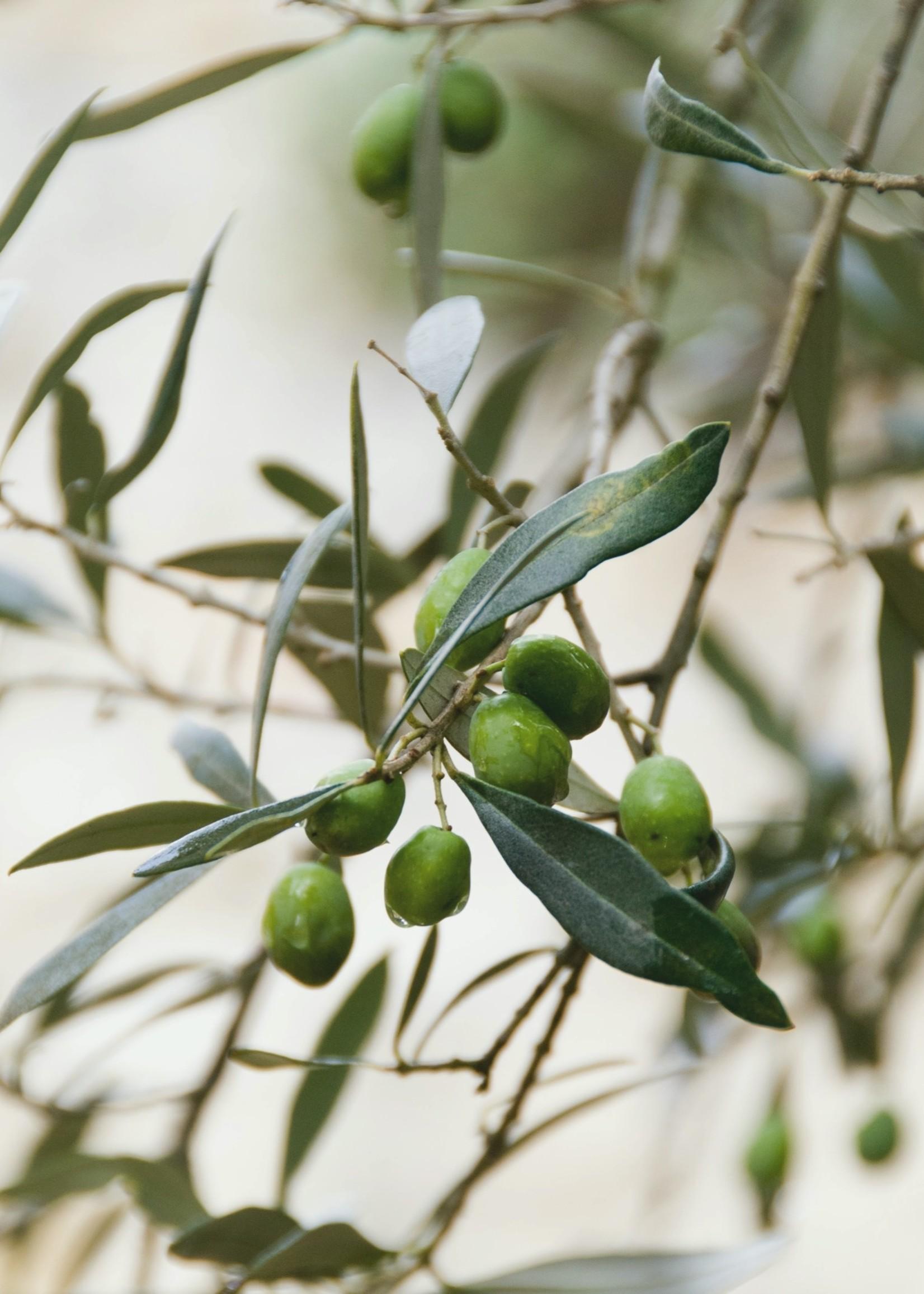 Savonneries Bruxelloises Savonneries Bruxelloises - Olive Flower - Soap