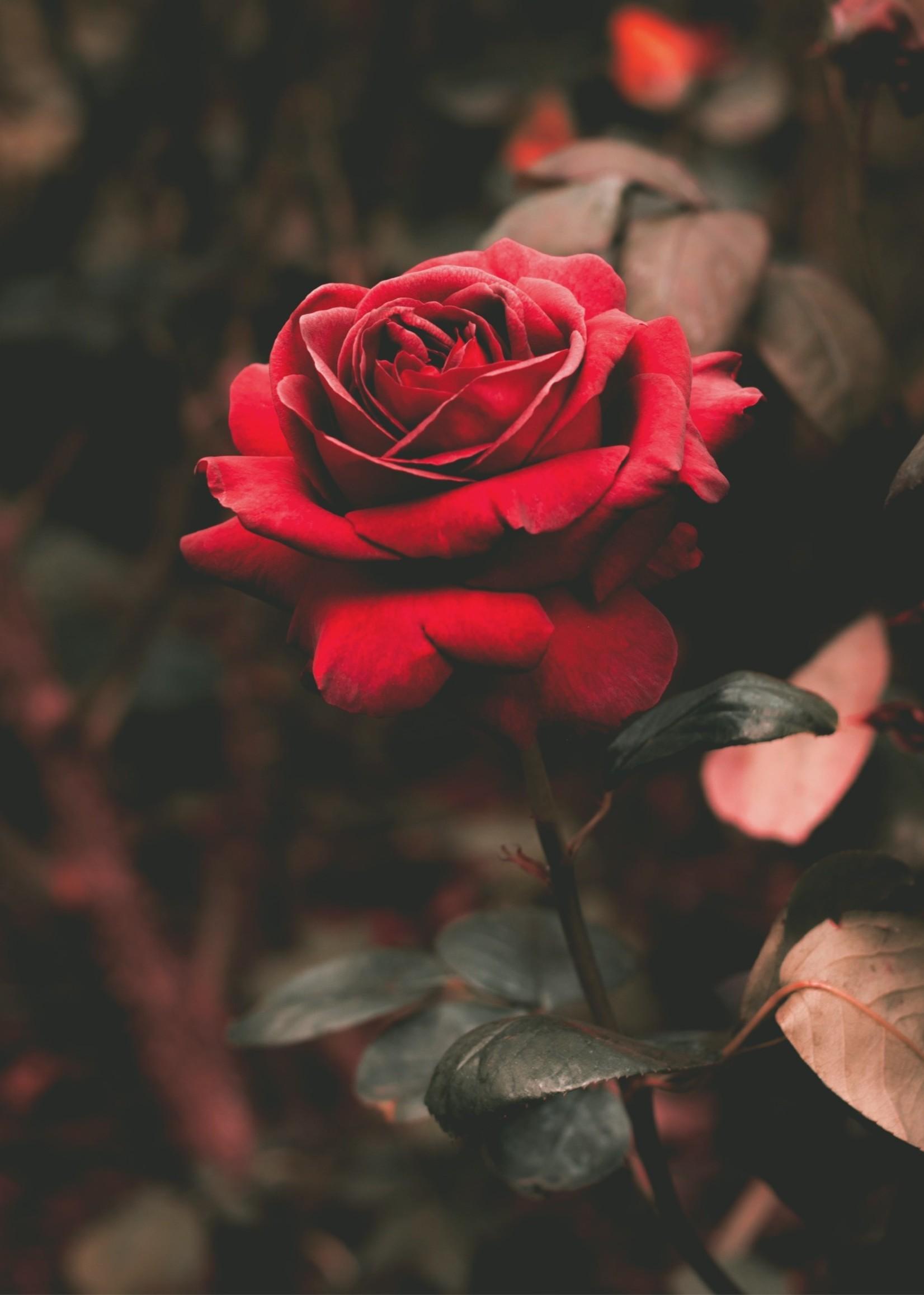 Savonneries Bruxelloises Savonneries Bruxelloises - Black Roses - Zeep