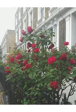 Gallivant Gallivant - London - Roll On Huile de Parfum 10 ml