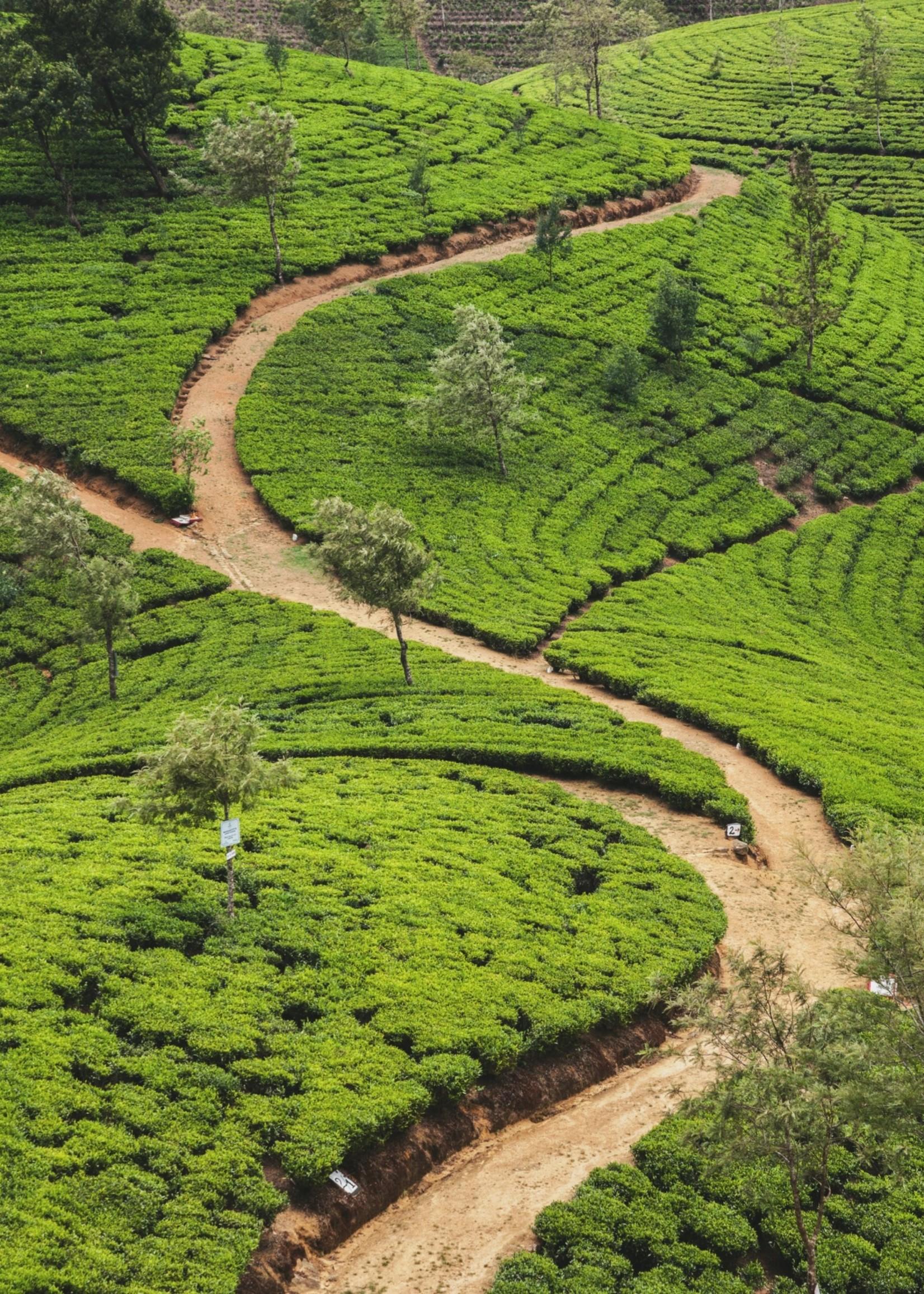 Locherber Locherber - Absolute Green Tea - Home Spray