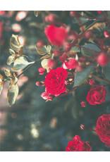 Label Bougie Label Bougie - La Rose - Geurkaars 180 gr