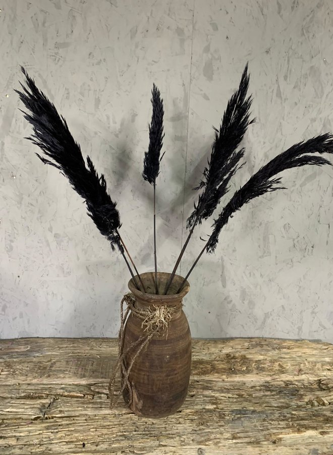 Droogbloemen Pampas zwart