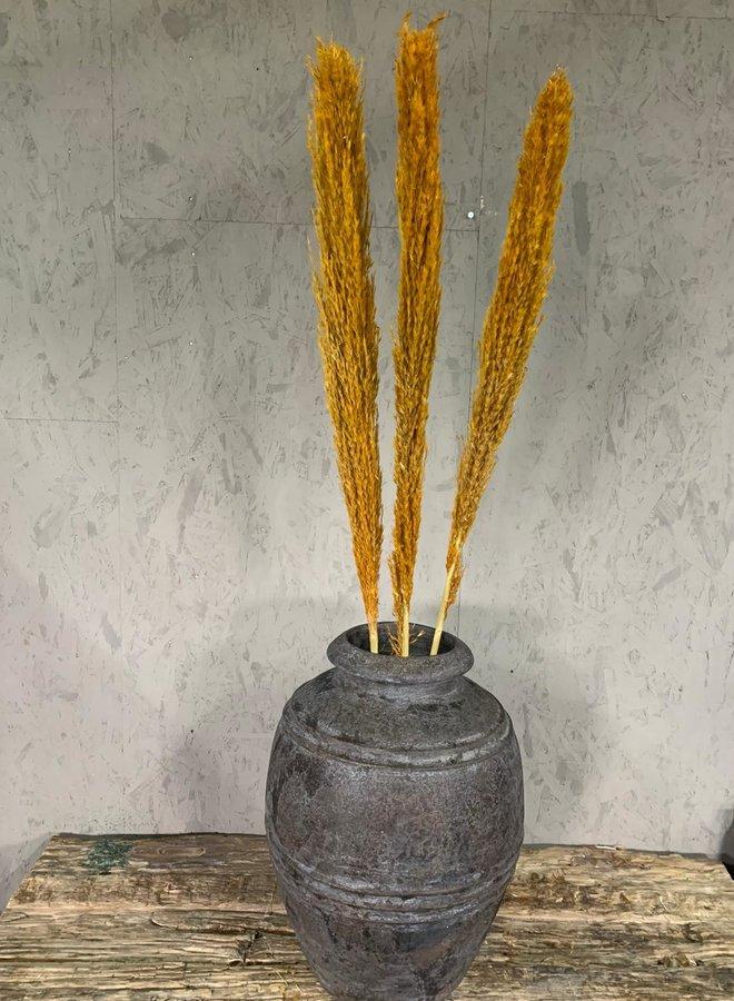 Droogbloemen Wild reed pluimen