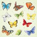 Mini kaartje - Vlinders