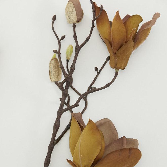 Magnolia tak | bruin