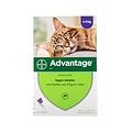 Bayer Advantage Katze