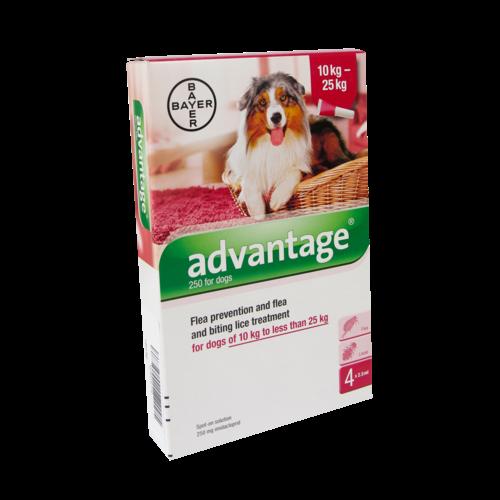 Bayer Advantage Chien