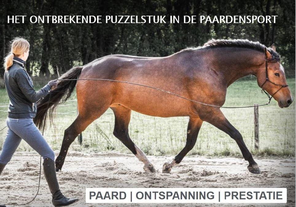 Horse Talant Training eBook Het ontbrekende puzzelstuk