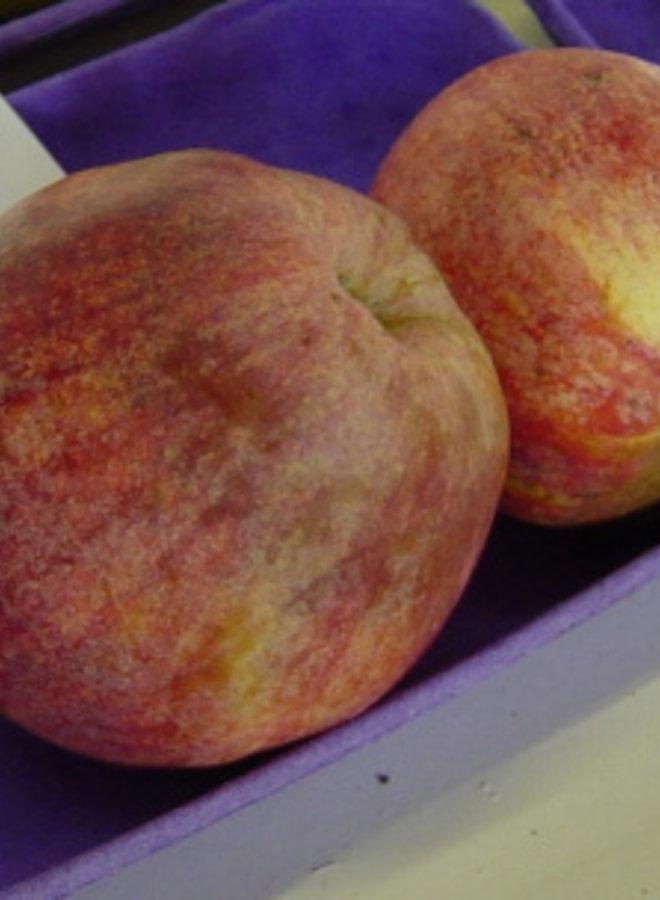 Appelboom | Malus domestica Drentsche Bellefleur