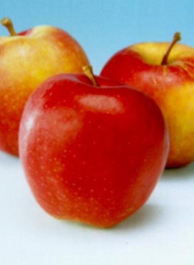 Appelboom - Malus domestica Gala Must