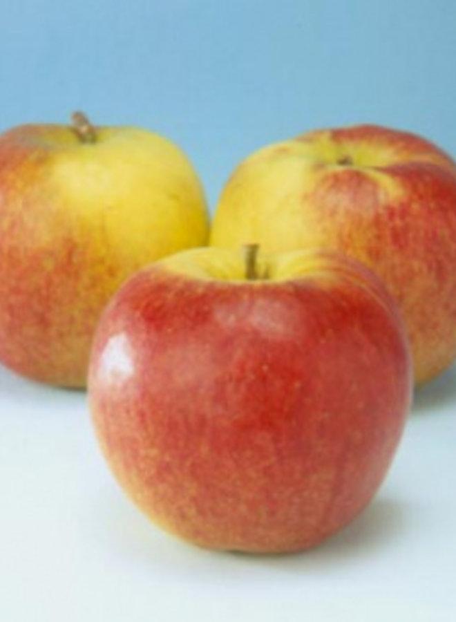 Appelboom - Malus domestica Jonagold