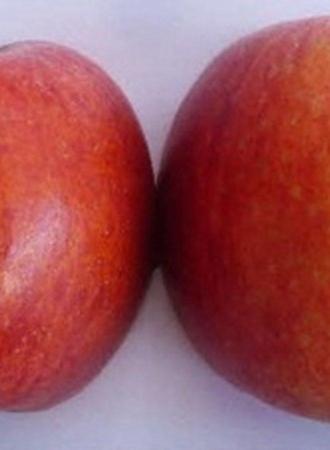 Appelboom | Malus domestica Roter Berlepsch