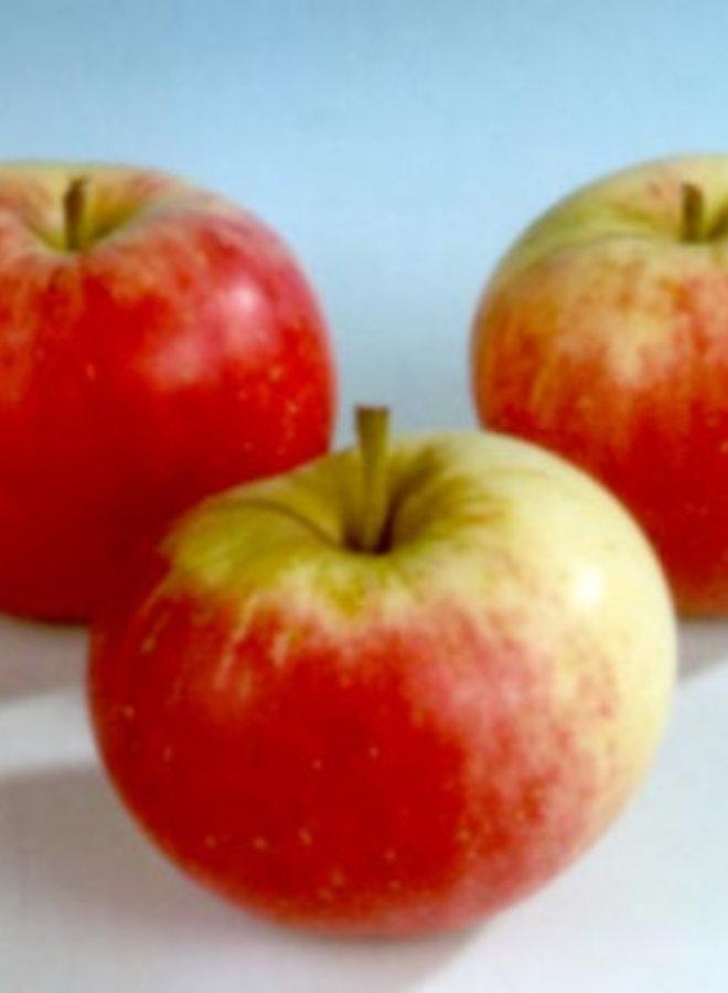 Appelboom - Malus domestica Stark's Earliest