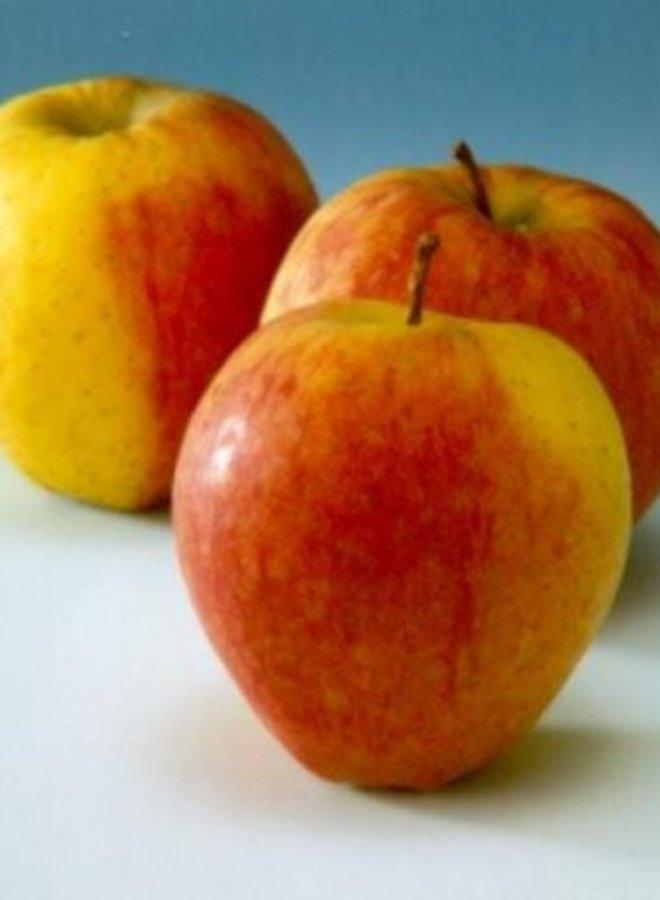 Appelboom - Malus domestica Tydeman's Early