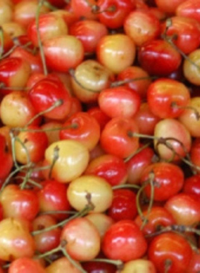 Kersenboom - Prunus avium Udense Spaanse