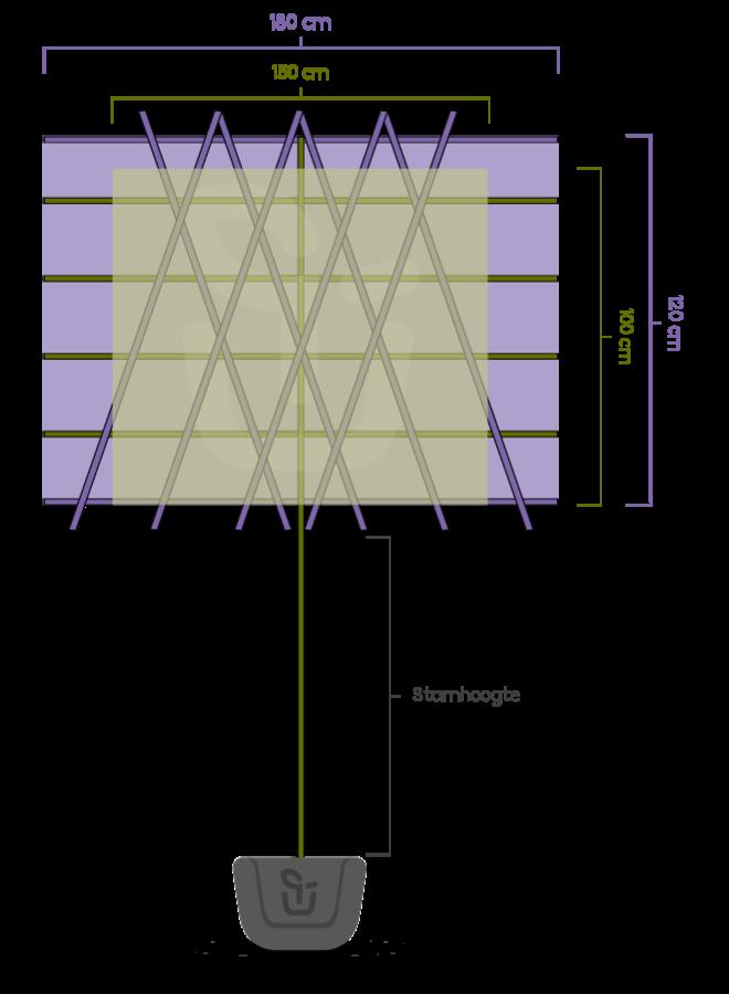 Kleinbladige leilinde | Tilia cordata Greenspire