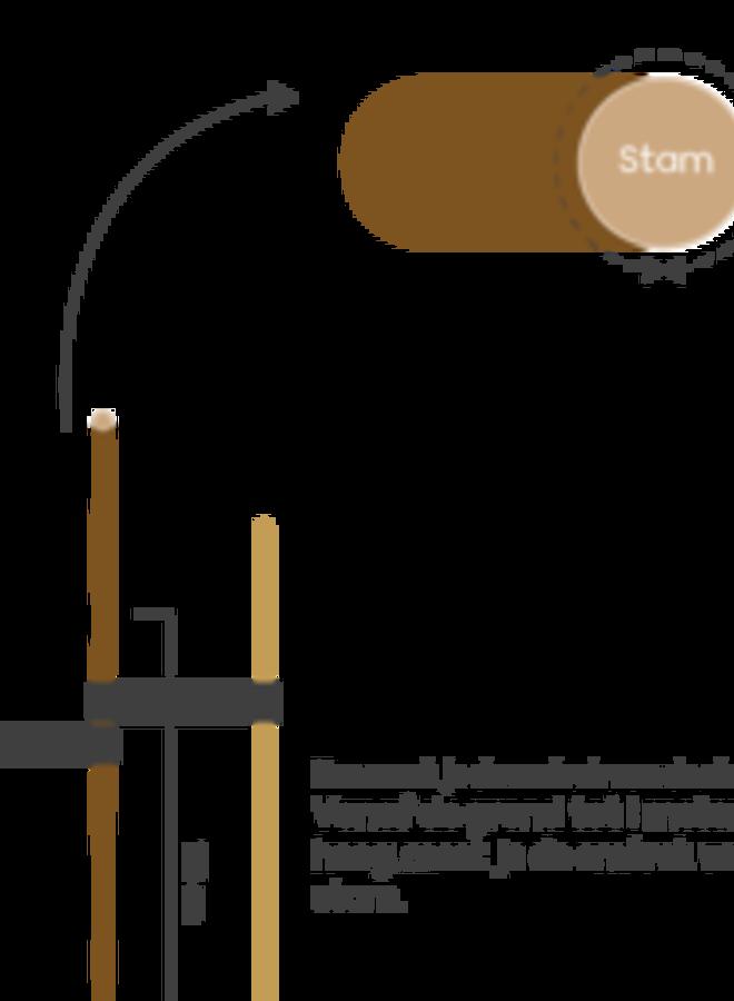 Leihaagbeuk   Carpinus betulus Lucas