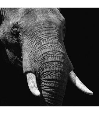 Wandkraft  Éléphant de la vie sauvage Afm 74x74
